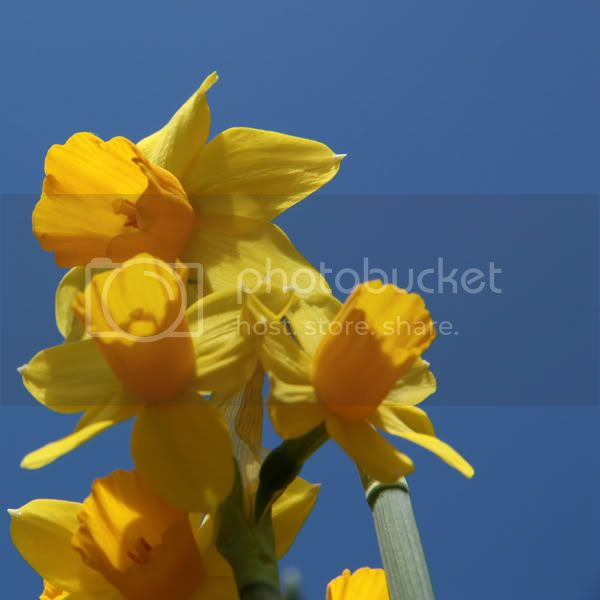 http://img.photobucket.com/albums/v97/jappie87/IMG_3594_600.jpg