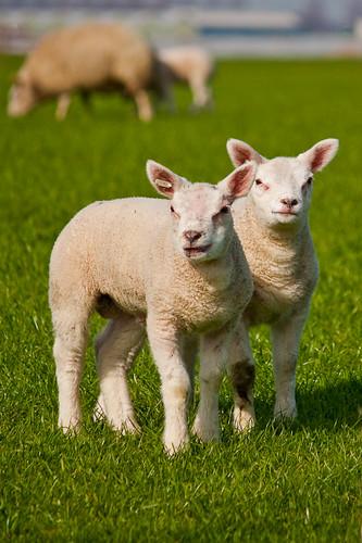 http://farm3.static.flickr.com/2802/4499839248_b4e496e765.jpg