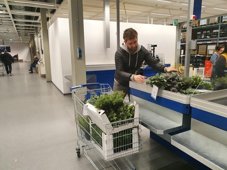 https://lumatronix.nl/FOK/VerticalGarden_Plantjes_kopen_Ikea.jpg