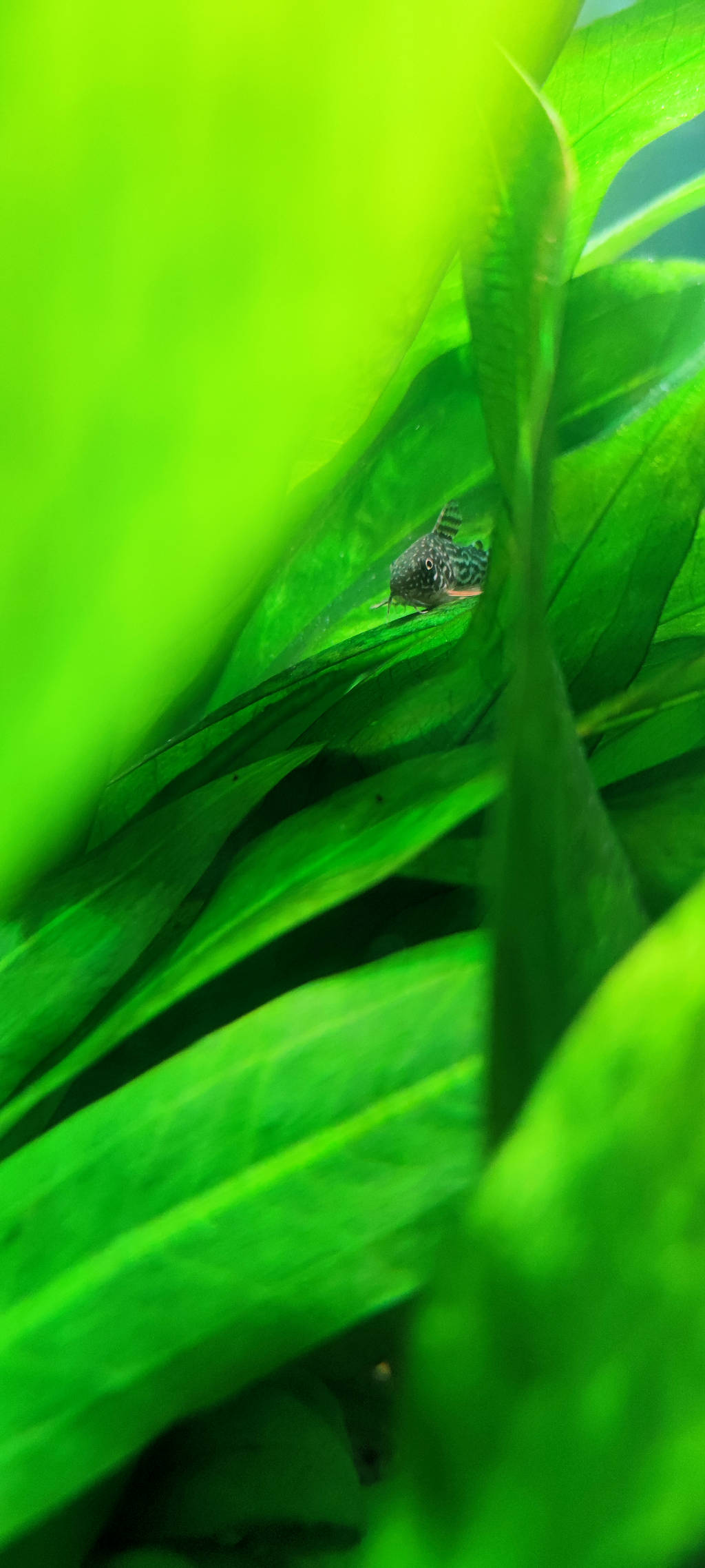 http://www.briandickens.nl/GoT/aquarium/2.jpg