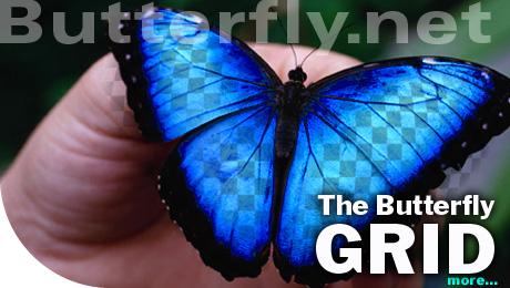 Butterfly.net