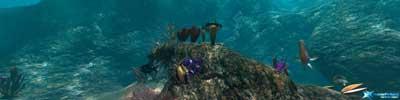 Parhelia Reef-demo (klein)