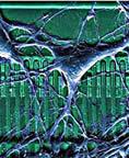 Neuro-chip
