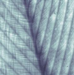 Close-up veer met CDM-lens zonder filtering