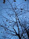 Branch Prediction / Takken