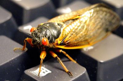 Large bug on keyboard