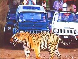 tijgersafari