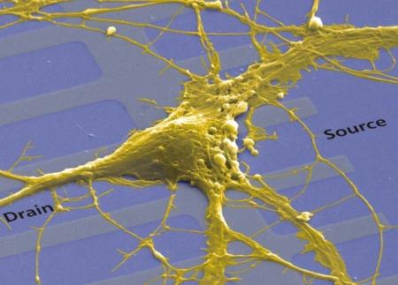 Neurochip - neuronen bovenop een array van transistors