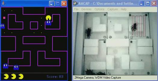 Pac-Man - door krekels aangestuurde spoken in actie