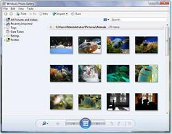 Windows Vista Gallery