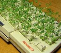 groen toetsenbord