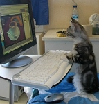kat +computer