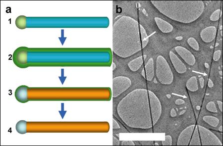Silicium nanodraad (groot)