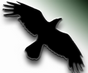 Data Crow logo (75 pix)