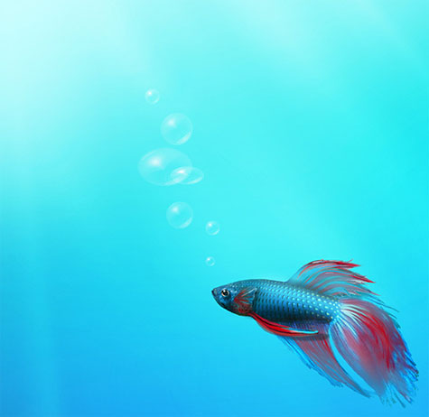 Windows 7 preview - fish