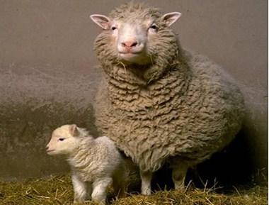 Het gekloonde schaap Dolly