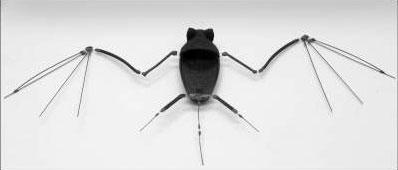 Skelet van een vleermuis-robot