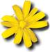 Amiga Forever logo (75 pix)