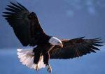 Eagle, spotted in the wild (zij het niet van ARM)