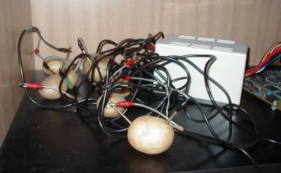 De aardappels