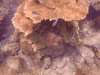 Snorkelen gopro met filter