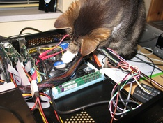 Kat controleert assamblage