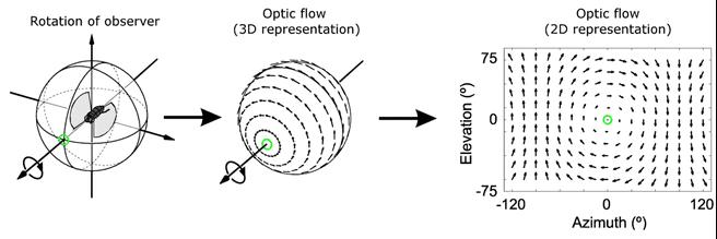Optic flow optisch stroomveld insect