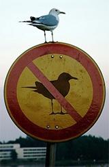 Vogelverbod