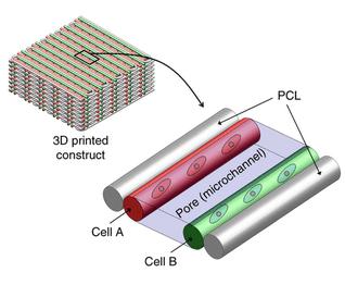 Celstructuur