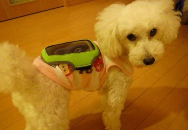Hond op rug van smartphone voor experiment Japanse wetenschappers