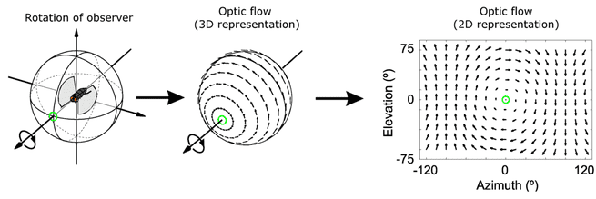 Optic flow optisch stroomveld insect