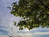Foto gemaakt met Huawei P20 Pro voor review Pixel 3