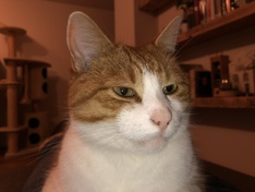Kat met flits