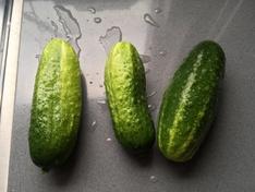 """mini"" komkommers"