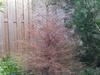 http://tweakers.net/ext/f/LL7Ve3zJLNaGObwFa34NK9H7/thumb.jpg
