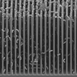 nanodraadjes nanowires bacterie