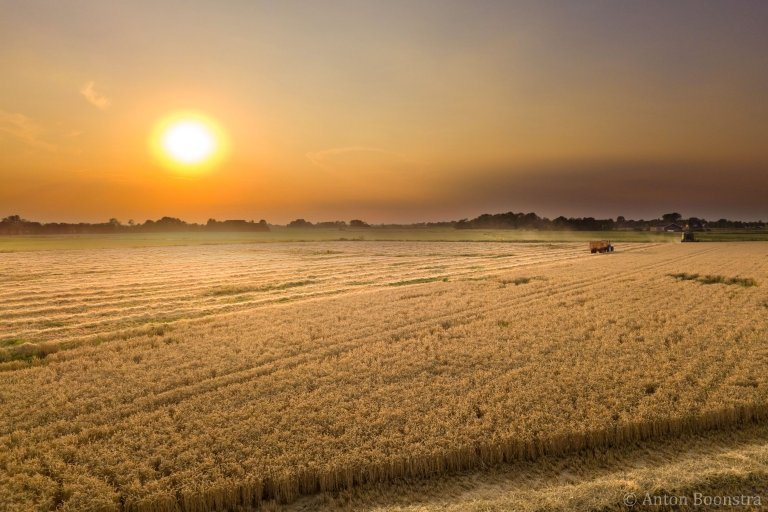 Oogst bij zonsondergang