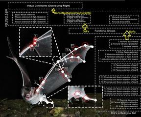Bat Bot onderzoek