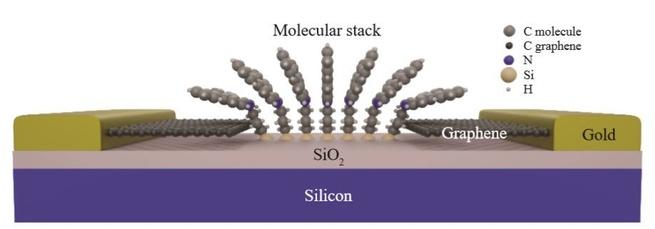 moleculaire brug grafeenelektroden
