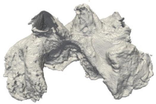 3D-simulatie van een schapenhart