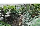 Vlindertuin Dierenpark Emmen