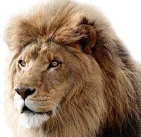 OS X Leeuwtje
