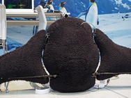 Pinguinrobot met vr-besturing