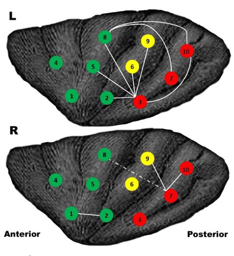 insula eiland van reil hersens verbindingen games
