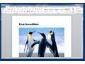Office 2010 - Word - Interface met Ribbon