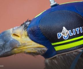 Politie zeearenden