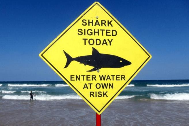 Australië haaien