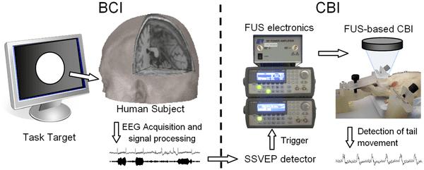 Brein-naar-brein-interface