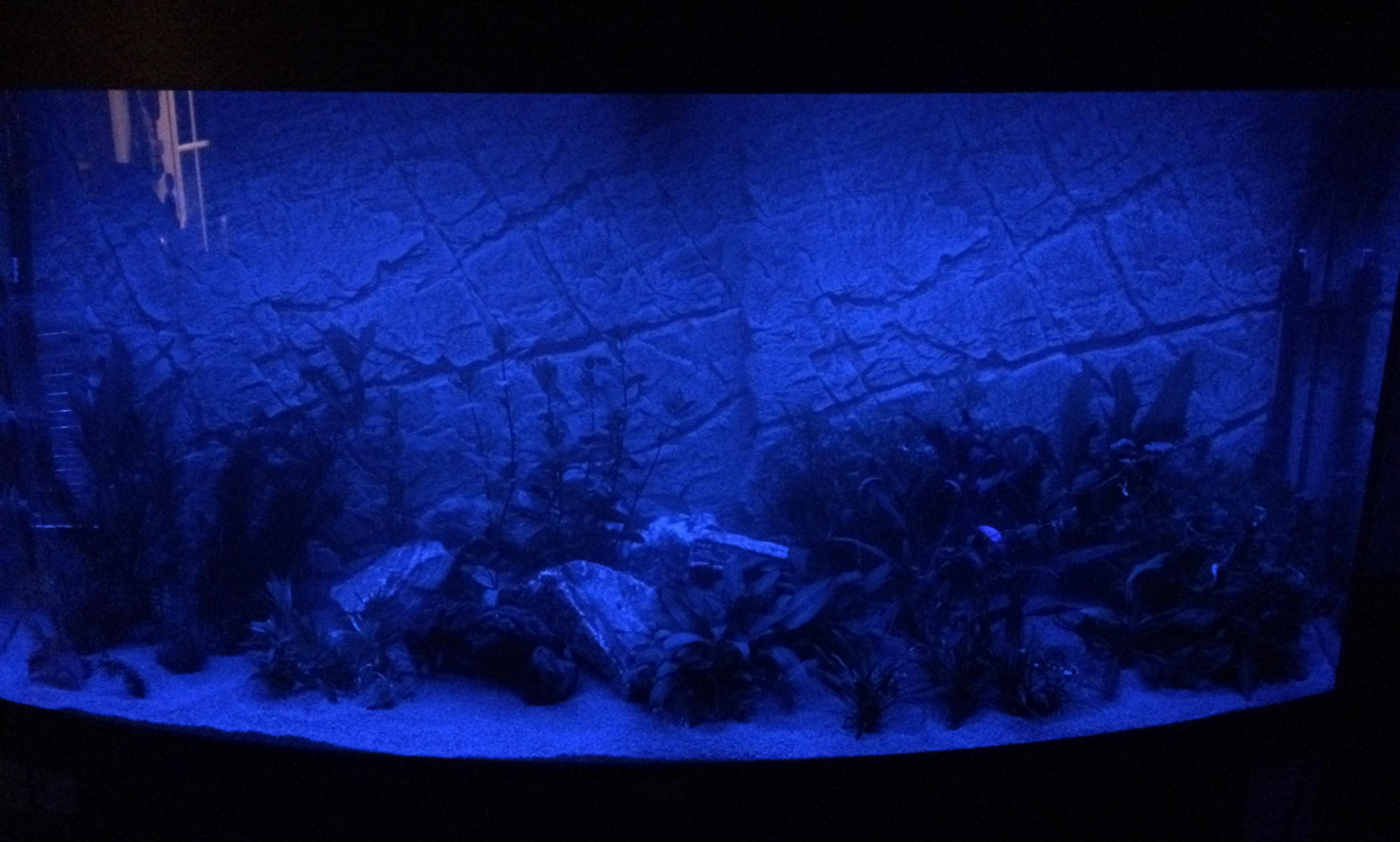 Het aquarium topic - Deel 8 - Algemene Zaken - GoT