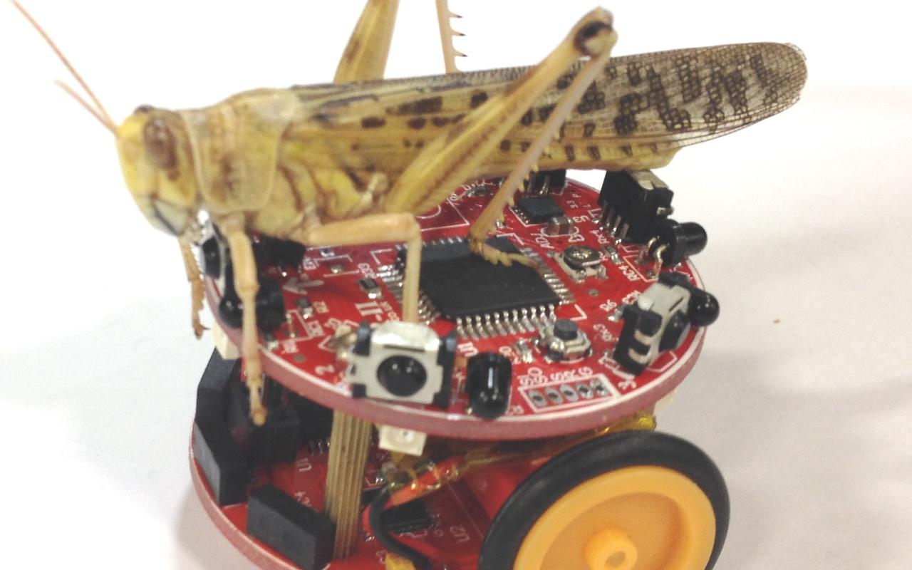 Wetenschappers bouwen Colias-microrobots die bijenzwermen nabootsen